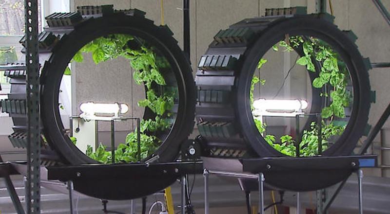 Green Spirit trồng cây trong những chiếc lồng hình trụ tròn đặt ngang.