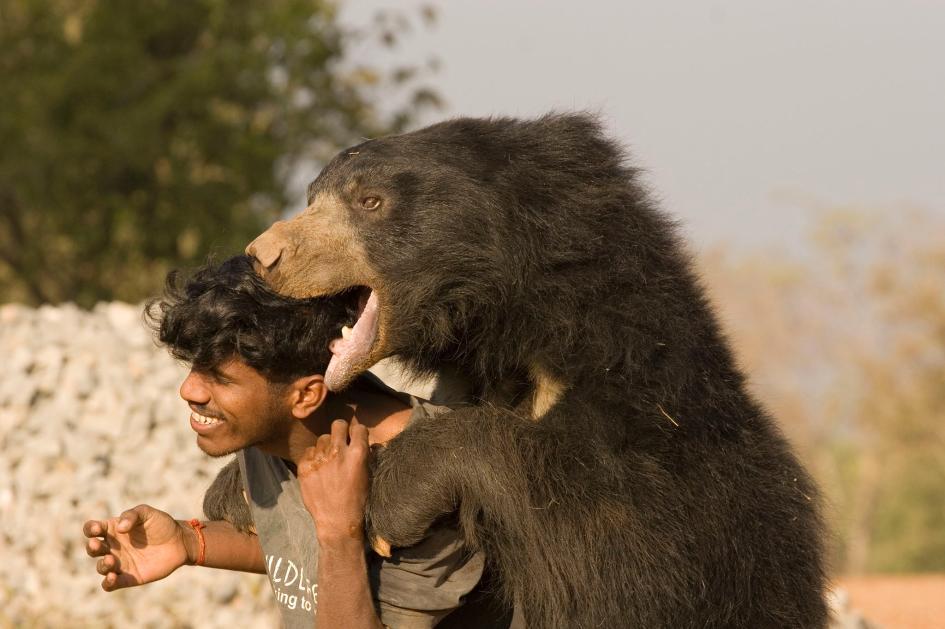 Gấu Baloo