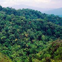 Thế giới mất diện tích rừng bằng 1.000 sân bóng mỗi giờ