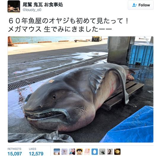 Sinh vật xuất hiện trong truyền thuyết bất ngờ bị dính cước ngư dân tại Nhật Bản.