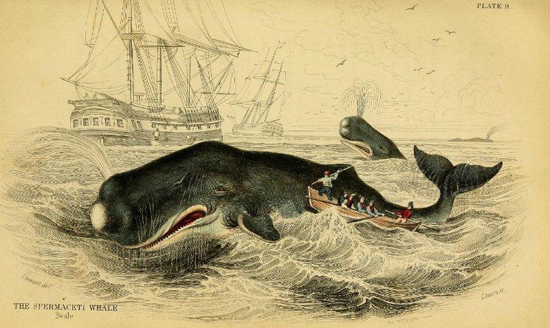 Cảnh săn cá nhà táng lấy dầu ở thế kỷ 19.