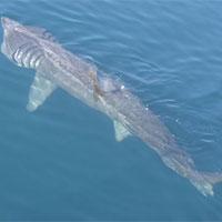 5 loài cá dài nhất thế giới