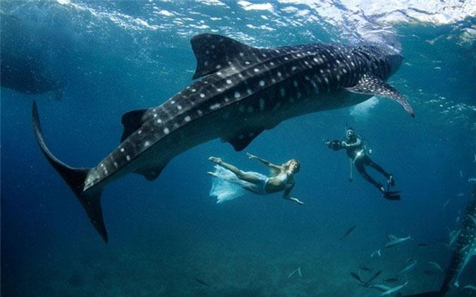 Chiều dài kỉ lục từng được biết đến của loài cá này là 18,8m