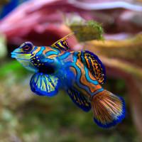 Những loài động vật đẹp nhất thế giới