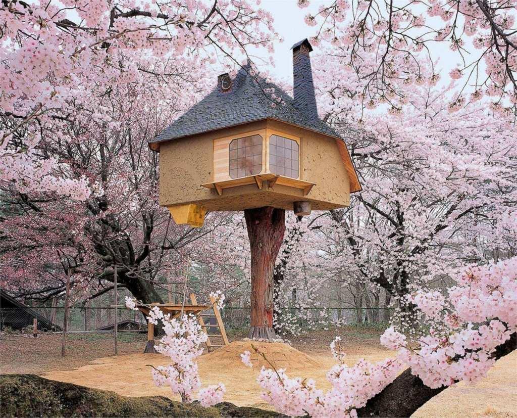 Teahouse Tetsu tree house, được bao quanh bởi những cây hoa anh đào tuyệt đẹp