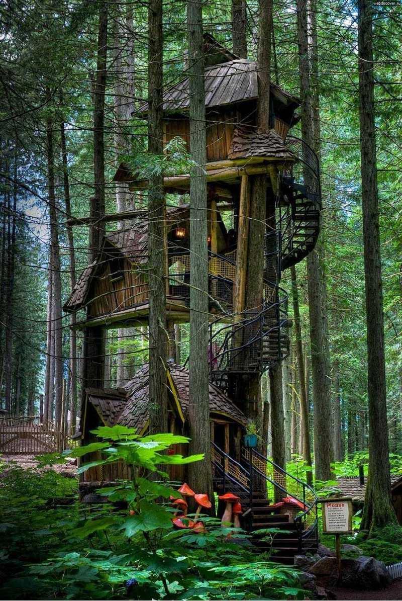 Căn nhà trên cây tại British Columbia, Canada.