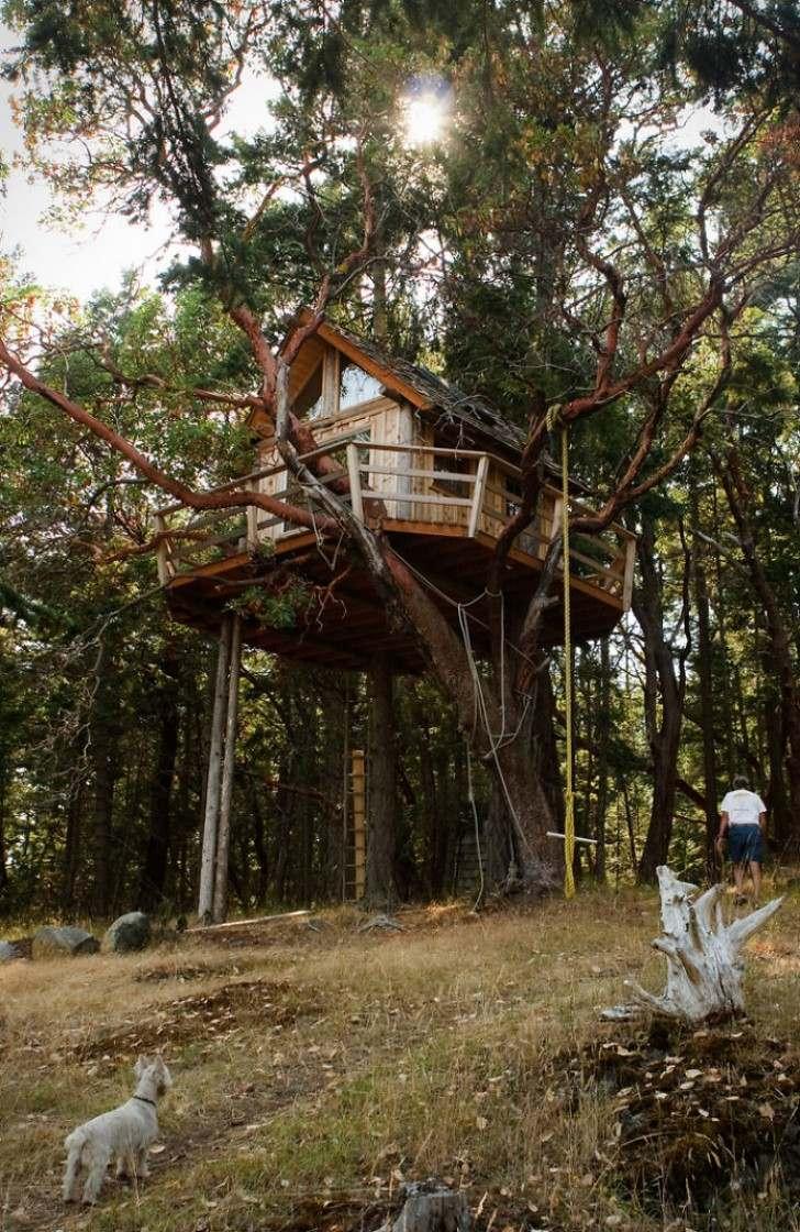 Ngôi nhà trên cây tại Henry Island, Bengal, Ấn Độ.