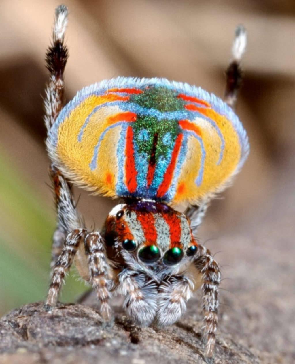 Chân dung một loài nhện
