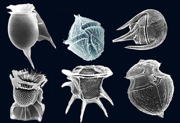 Đây là loại độc chất nguy hiểm nhất tồn tại trong cơ thể của các động vật biển.