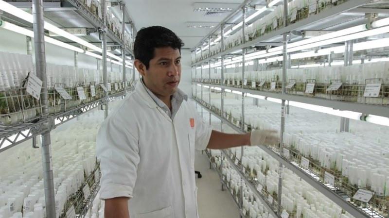 Khoai tây được trồng thử nghiệm mô phỏng điều kiện trên sao Hỏa trong Trung tâm Khoai tây Quốc tế ở Peru.