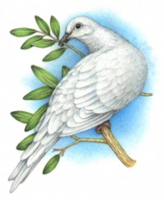 Hình ảnh chim bồ câu ngậm cành lá là biểu tượng của hòa bình