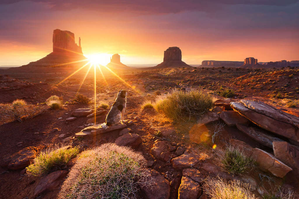 Một chú chó ngắm mặt trời lên trên Thung lũng tượng đài ở Cao nguyên Colorado ở Hoa Kỳ.