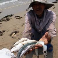 Cá biển chết hàng loạt dọc 4 tỉnh miền Trung