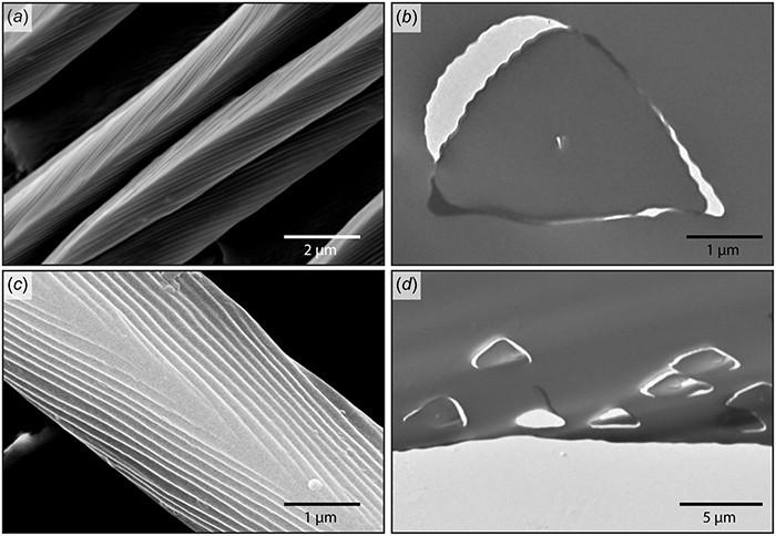 Hình ảnh kính hiển vi điện tử quét lông trên cơ thể kiến bạc Sahara.