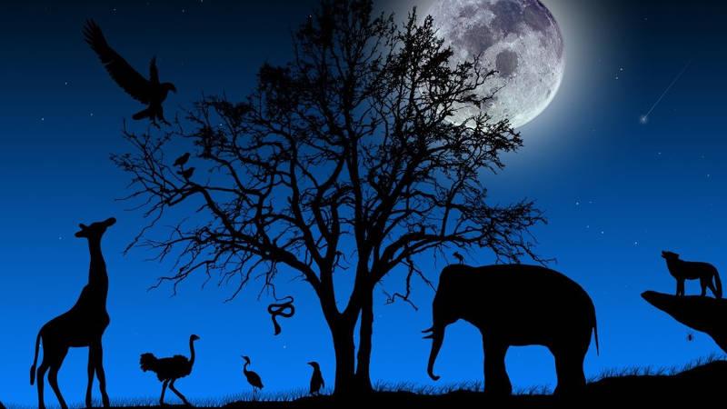 Mối liên hệ giữa mặt trăng với việc vật nuôi bị thương chưa được làm sáng tỏ.