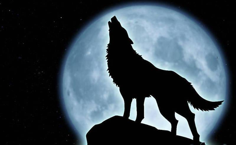 Trong một nghiên cứu, trăng tròn còn có tác động lên các loài vật.