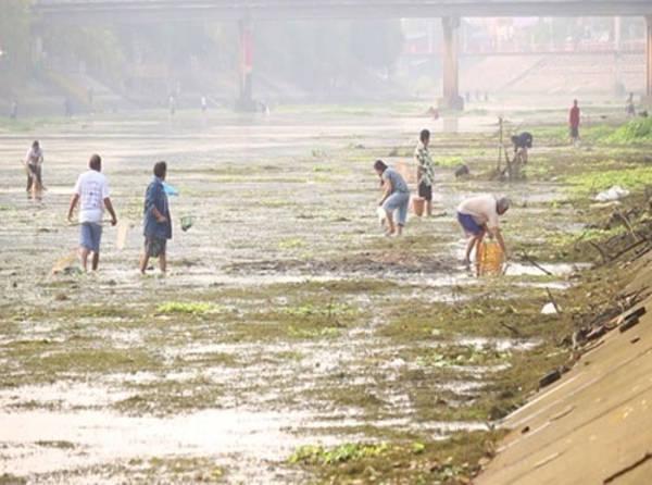 Hàng trăm người dân Thái Lan đã tụ tập ở Lampang để vớt bỏ hàng ngàn con cá chết trên sông Nam Wang