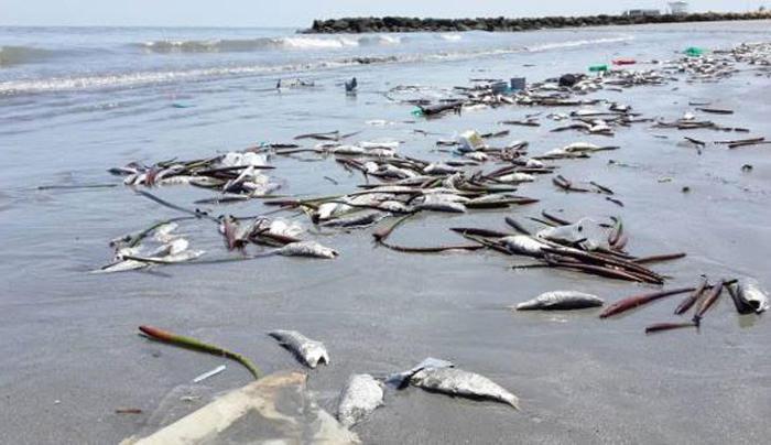 Xác cá chết hàng loạt dọc bờ biển khu vực Martha's Vineyard thuộc bang Massachusetts, Mỹ