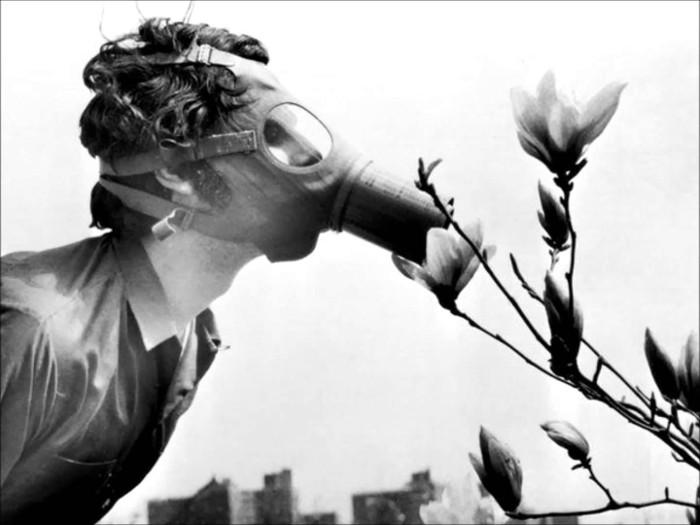 Chàng trai này giả làm con ong ngửi hoa mộc lan gần đại học Pace, New York, Mỹ.