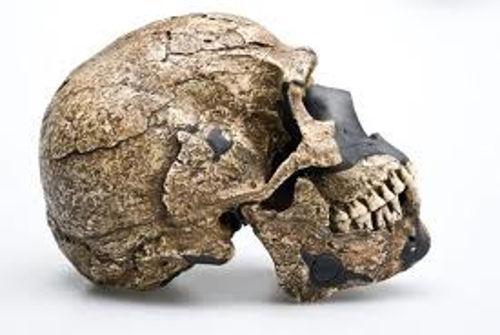 Các nhà khảo cổ học còn tìm được những mẫu hóa thạch mà dựa trên những mẫu hóa thạch đó có thể phác họa được khuôn mặt người tiền sử.