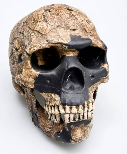 Phần xương sọ hóa thạch người tiền sử tìm thấy tại Di chỉ