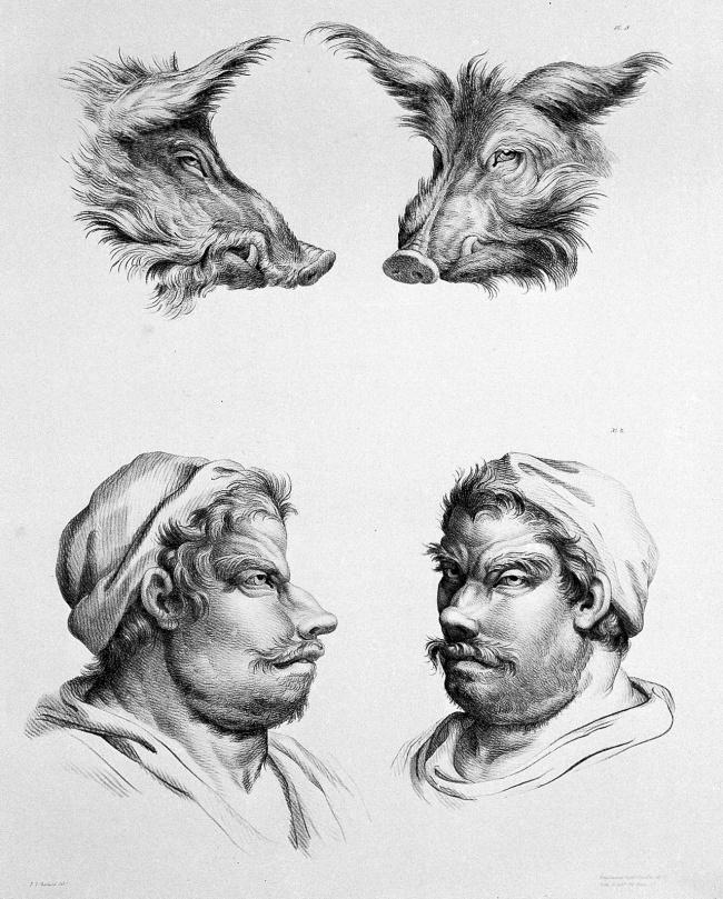 Lợn lòi đực