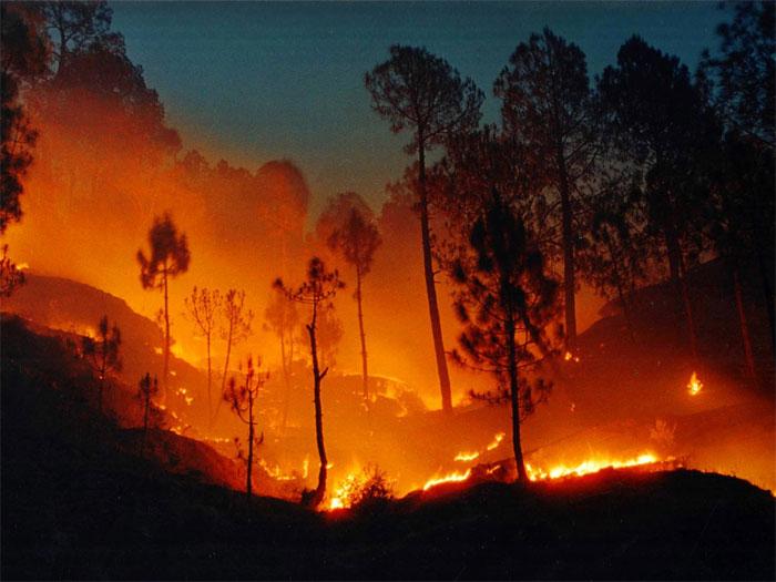 Cháy rừng.