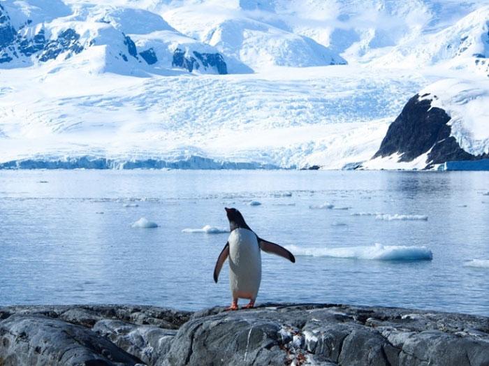Và vào cuối thế kỷ 25, những tảng băng cuối cùng tại Tây Nam Cực biến mất sau nhiều năm bị bào mòn.