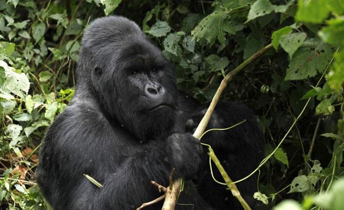 Động vật có vú cũng bị đe dọa, nhiều loài sẽ biến mất trên Trái đất.Động vật có vú cũng bị đe dọa, nhiều loài sẽ biến mất trên Trái đất.