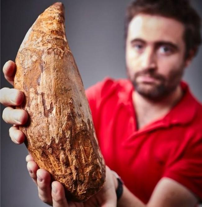 Nhà cổ sinh vật học Erich Fitgerald nhận xét việc phát hiện chiếc răng có ý nghĩa quan trọng.