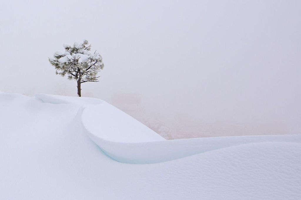 Trong một trận bão tuyết ở hẻm núi Bryce, Utah, Mỹ, một thân cây cô đơn hiện trên nền khung cảnh trắng xóa, nơi tầm nhìn gần như bằng 0.