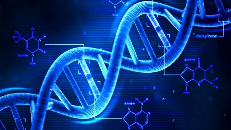 Bằng phương pháp chỉnh sửa gene, con người có thể trẻ mãi không già?