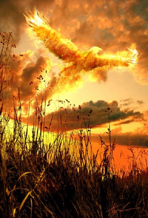 Loài chim tự thiêu rồi lại tái sinh từ chính tro bụi.