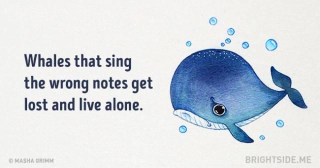 Cá voi mà hát sai nốt sẽ bị lạc và sống một mình