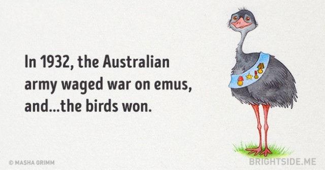 Năm 1932, quân đội Úc đã chiến đấu với Emus (đà điểu châu Úc) và những chú chim đã giành chiến thắng