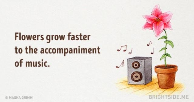 Hoa phát triển nhanh hơn khi có nhạc kèm theo
