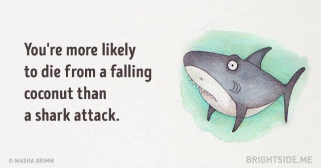 Bạn có nhiều khả năng chết do một quả dừa rơi xuống hơn là bị cá mập tấn công