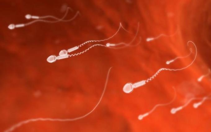 Tinh trùng người dưới kính hiển vi.