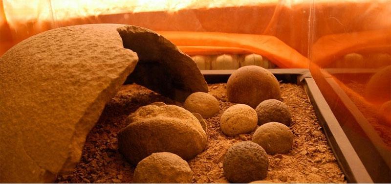 Những quả trứng khủng long đầu tiên trên thế giới được tìm thấy ở sa mạc Gobi, trong phần lãnh thổ của cả Trung Quốc và Mông Cổ.