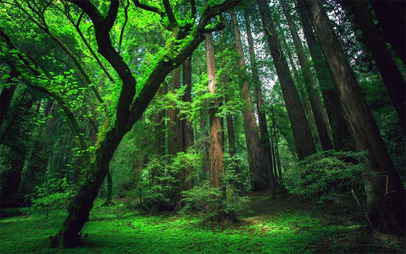 Rừng nhiệt đới Amazon chịu ảnh hưởng từ sa mạc Sahara.