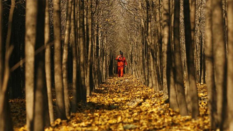 Trung Quốc đã trồng rừng nhân tạo lớn nhất thế giới để ngăn chặn sự mở rộng của sa mạc Gobi.