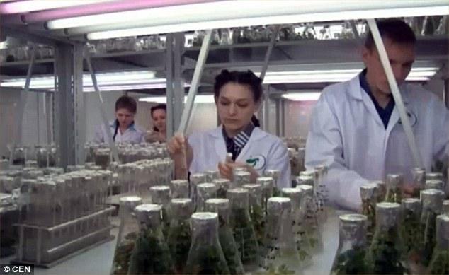 Tia laser kích thích cây trồng phát triển