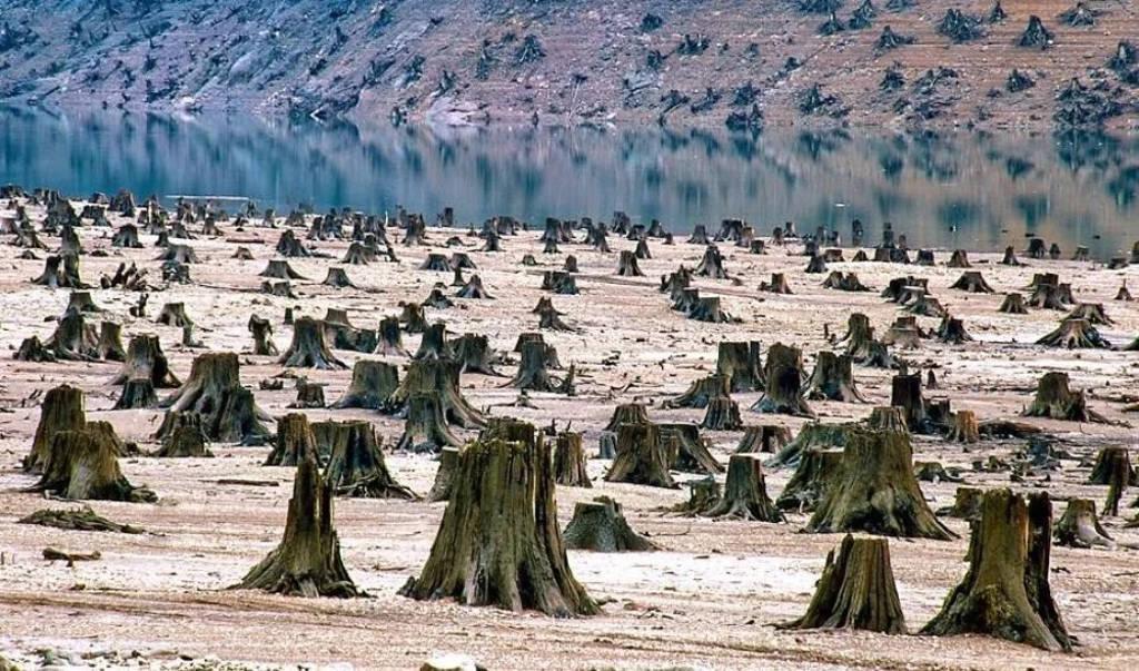 Vùng rừng hoang tàn này nằm ở gần vườn quốc gia Oregon, Mỹ