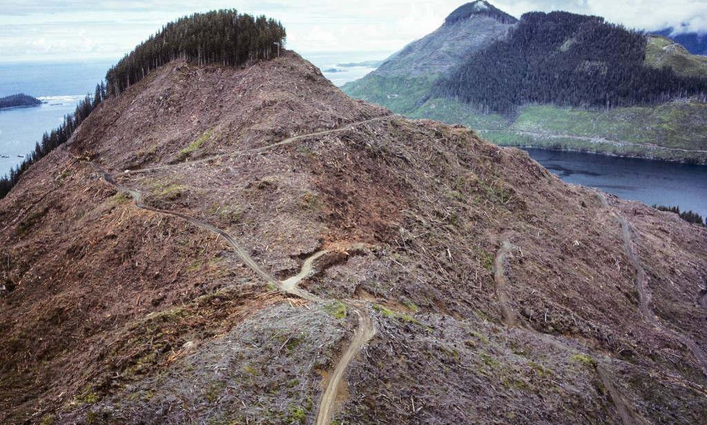 Tấm ảnh chụp lại một nơi đã từng là khu rừng ở Canada, hiện giờ nó chỉ là một đống đất đá khổng lồ trọc lóc.
