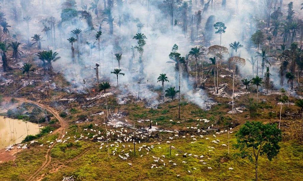 Những người dân vùng đồng bằng Amazon đốt rừng để làm đồng trồng cỏ nuôi gia súc