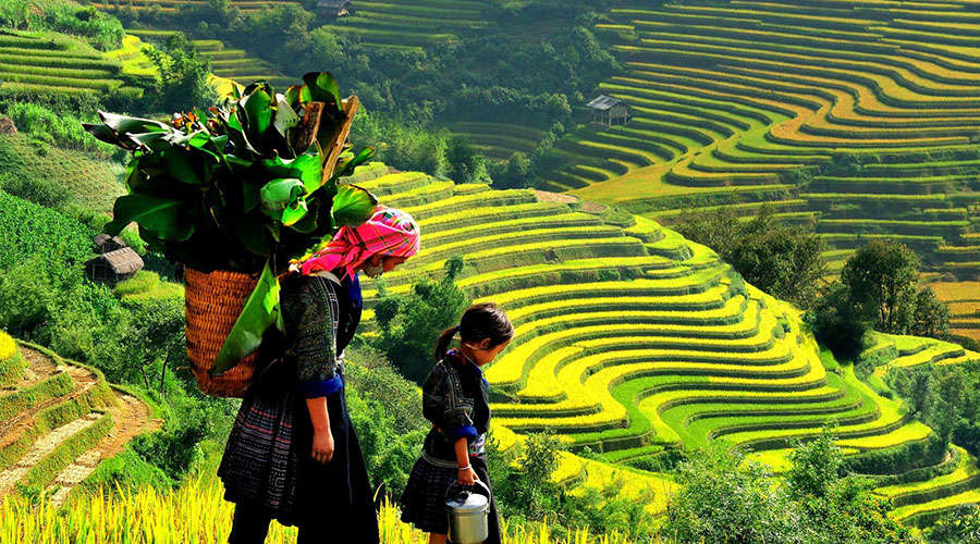 Không chỉ có Pisac, Peru mới nổi tiếng với ruộng bậc thang mà Sapa, Việt Nam cũng chẳng hè kém cạnh