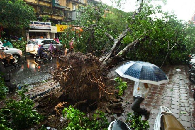 Khi xảy ra giông bão cần tránh xa các cây to