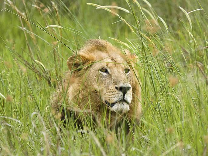 Theo ước tính có hơn 200.000 động vật có vú lớn cư trú tại khu vực đồng bằng
