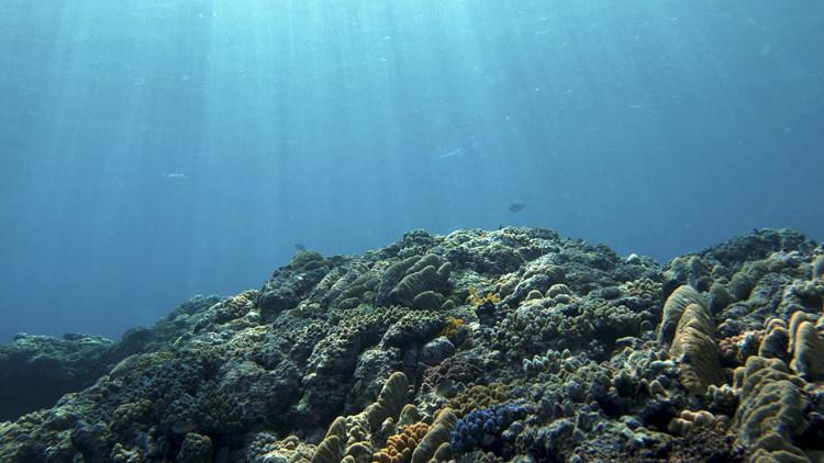 Rặng san hô bị tẩy trắng ở vùng biển giữa Ấn Độ Dương và Thái Bình Dương.