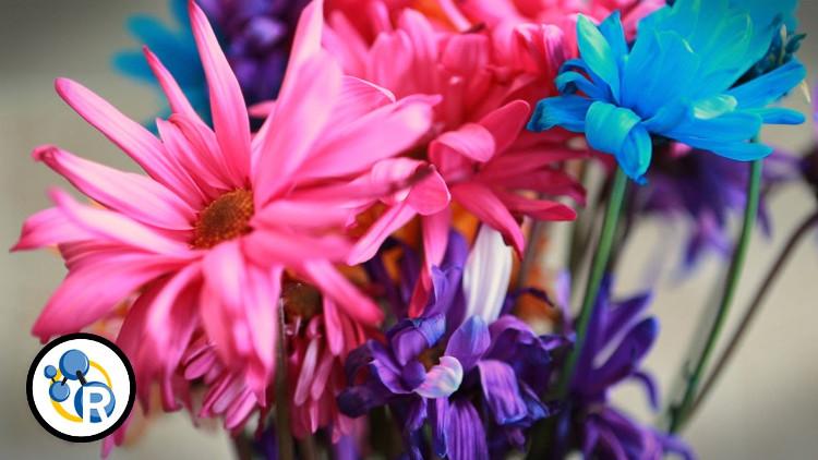 Chất lượng nước cũng đóng một vai trò quan trọng đối với sự sống sót của các bông hoa.